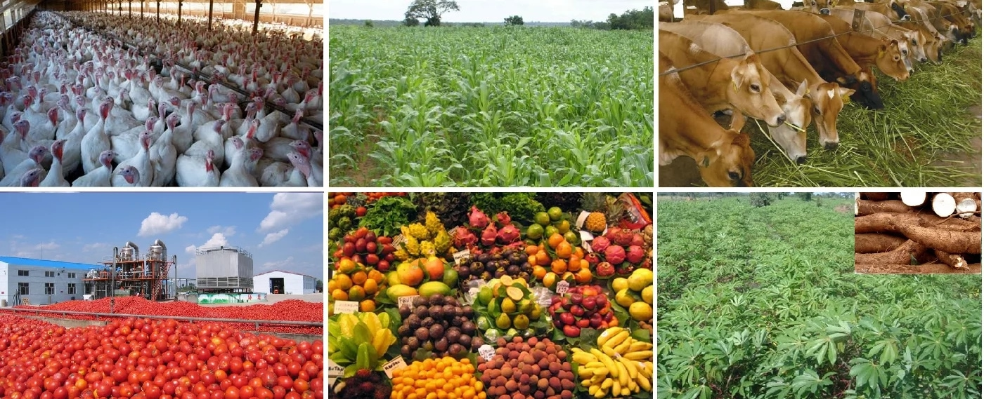 Exploring The Social and Economic Footprints of Agriculture